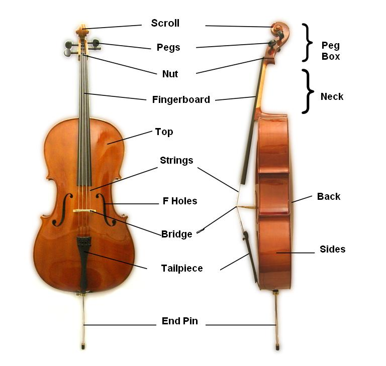 parts of a cello
