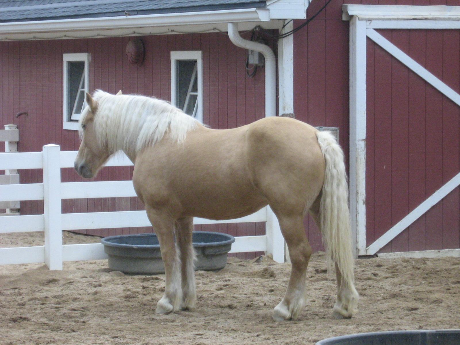 File Draft Horse Jpg Wikimedia Commons