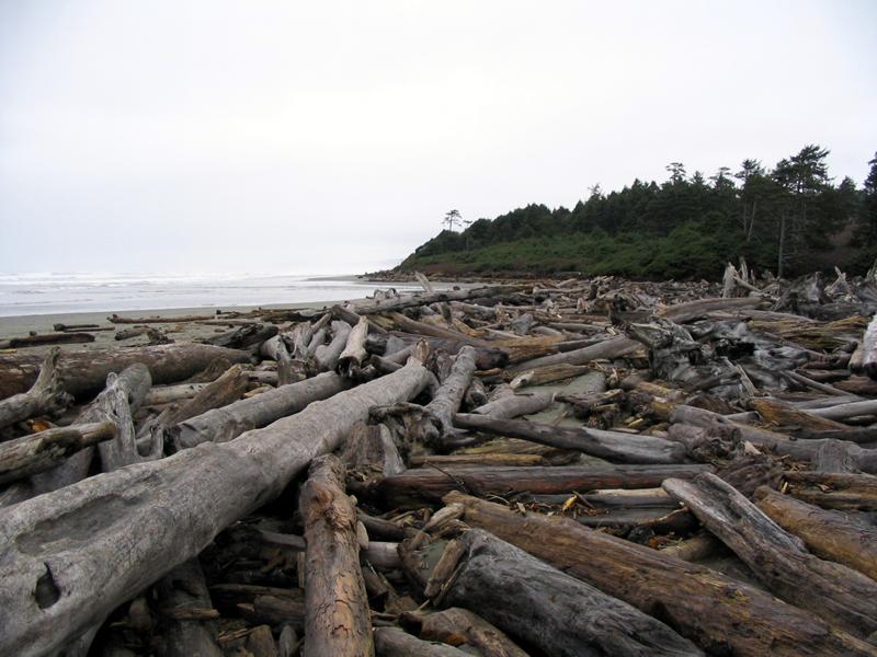 Burning driftwood may create a toxic smoke