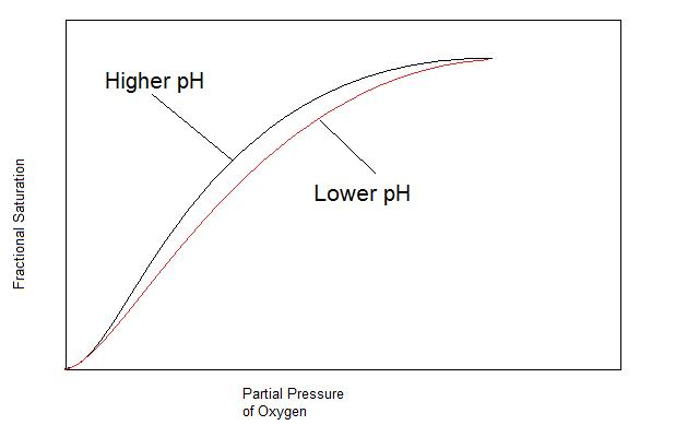 Effect of Ph on Hemoglobin's Oxygen Affinity.jpg