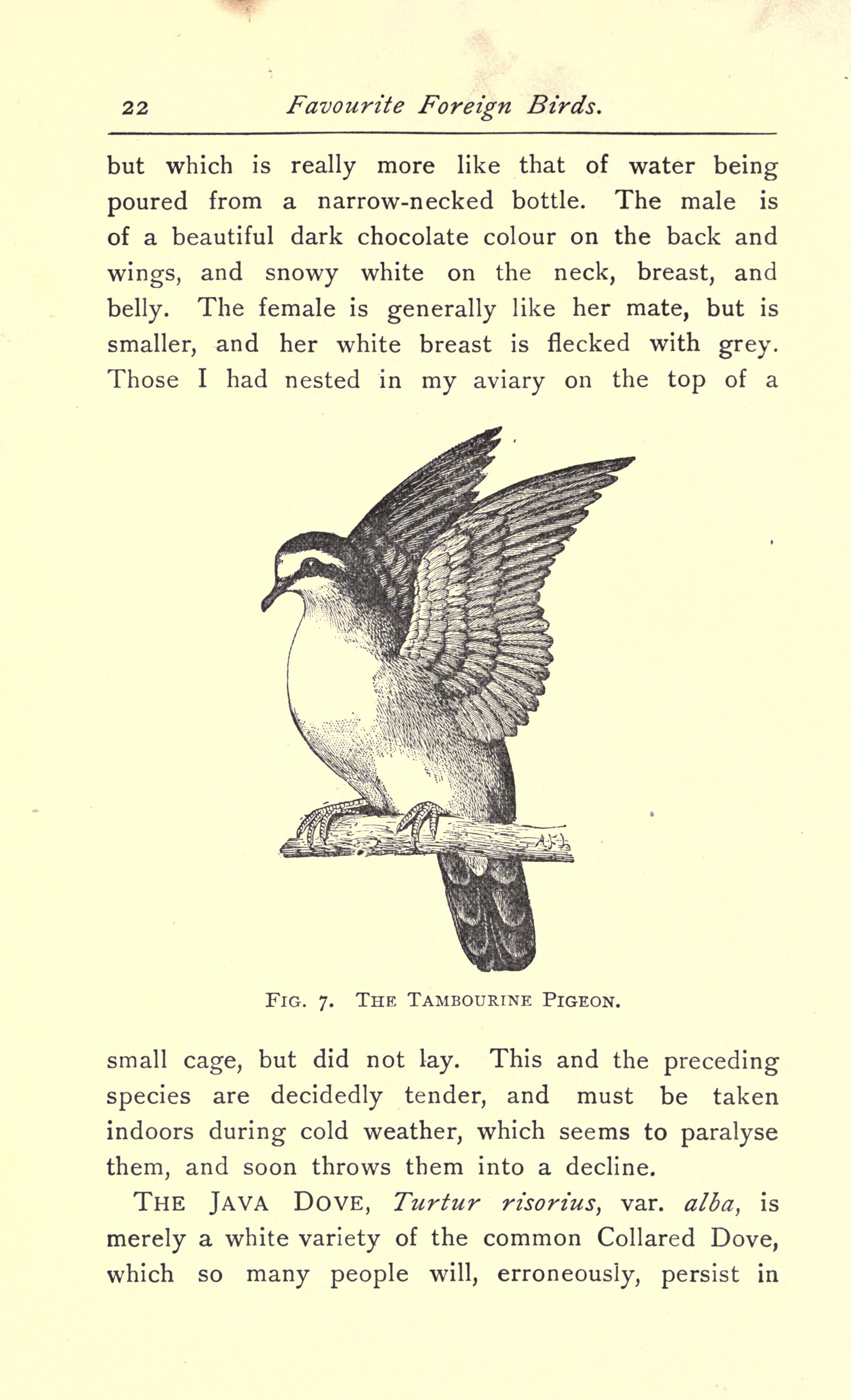 File:Favorite foreign birds for cages and aviaries (Page 22 ...