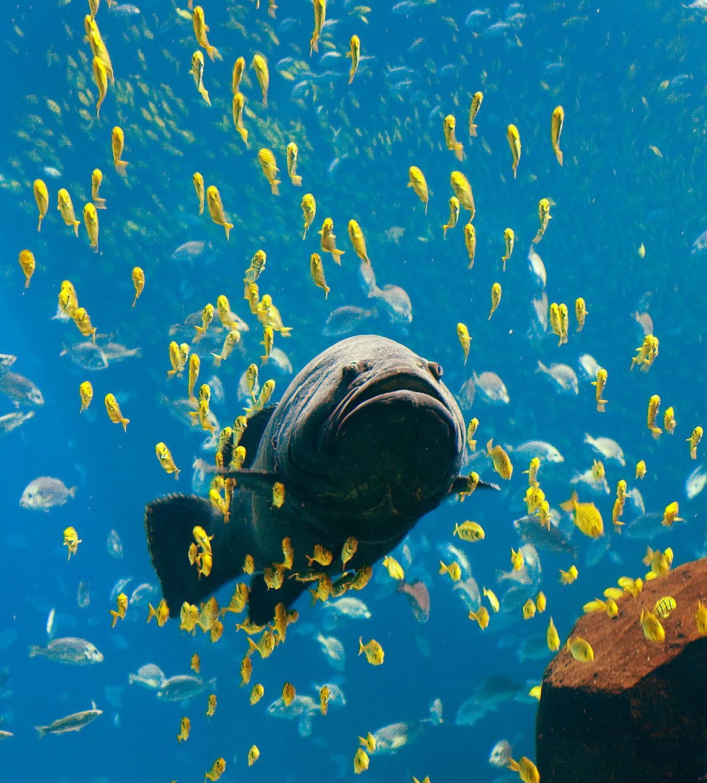Knochenfische – Wikipedia