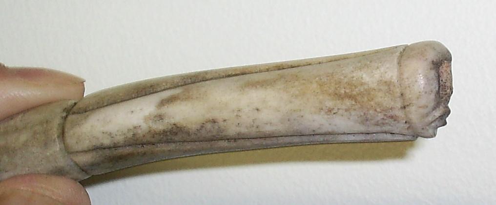 File Inuit Caribou Bone Carving Jpg Wikimedia Commons