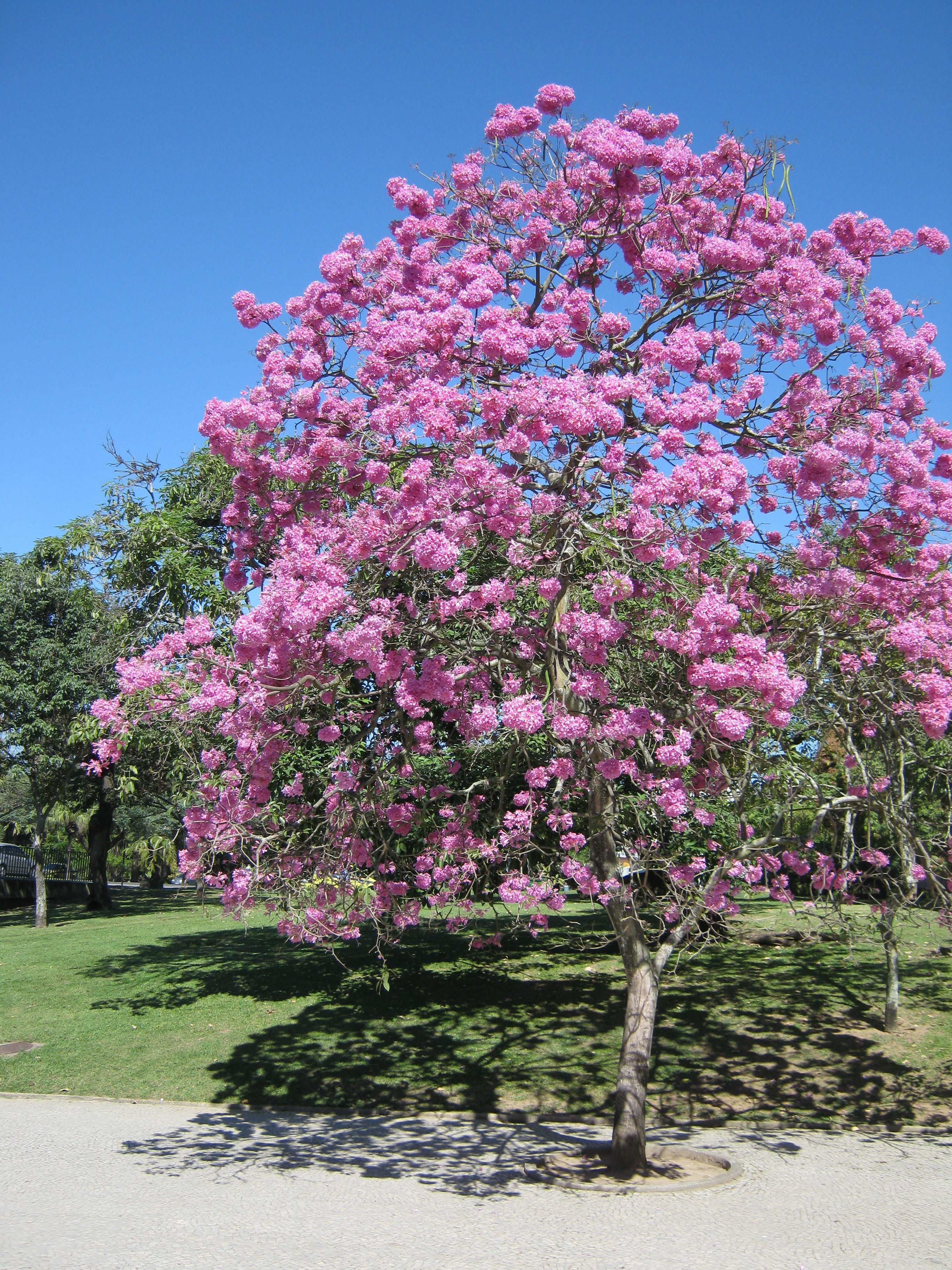 jardim ipe mandaguacu : Jardim Ipe Related Keywords & Suggestions - Jardim Ipe ...