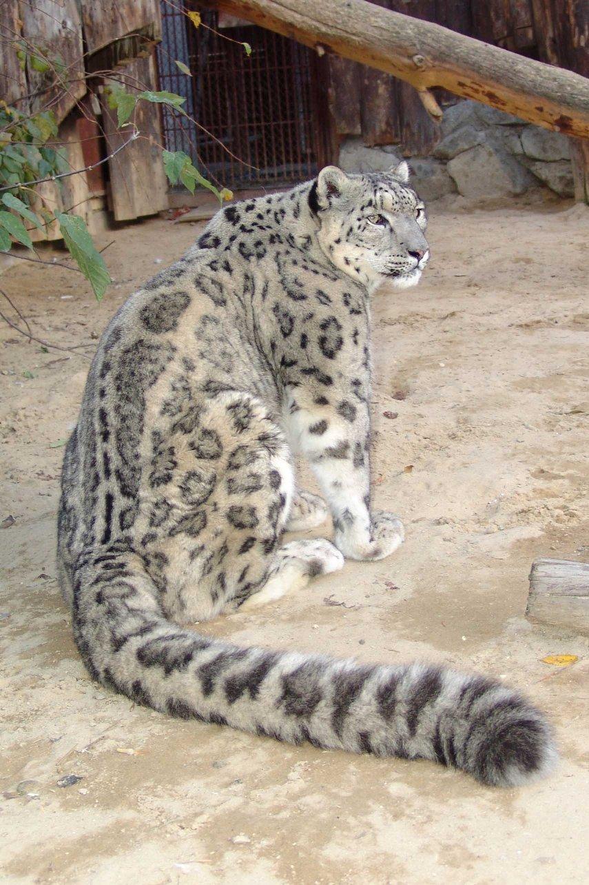 Животные красной книги татарстана фото 3