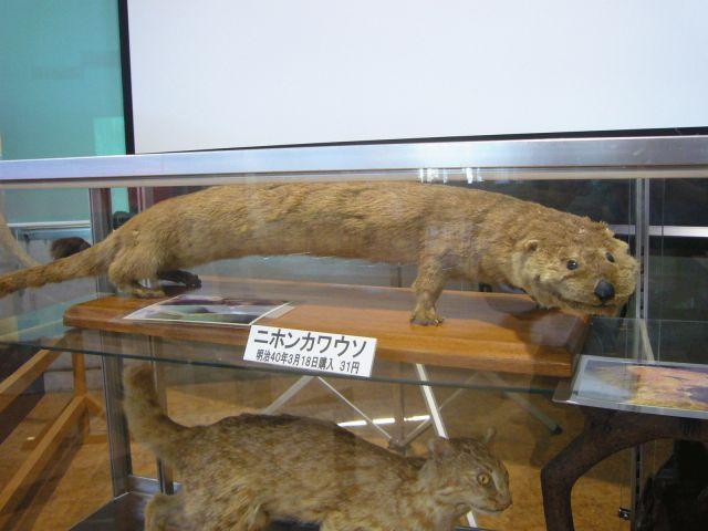 File:Japanese otter.jpg