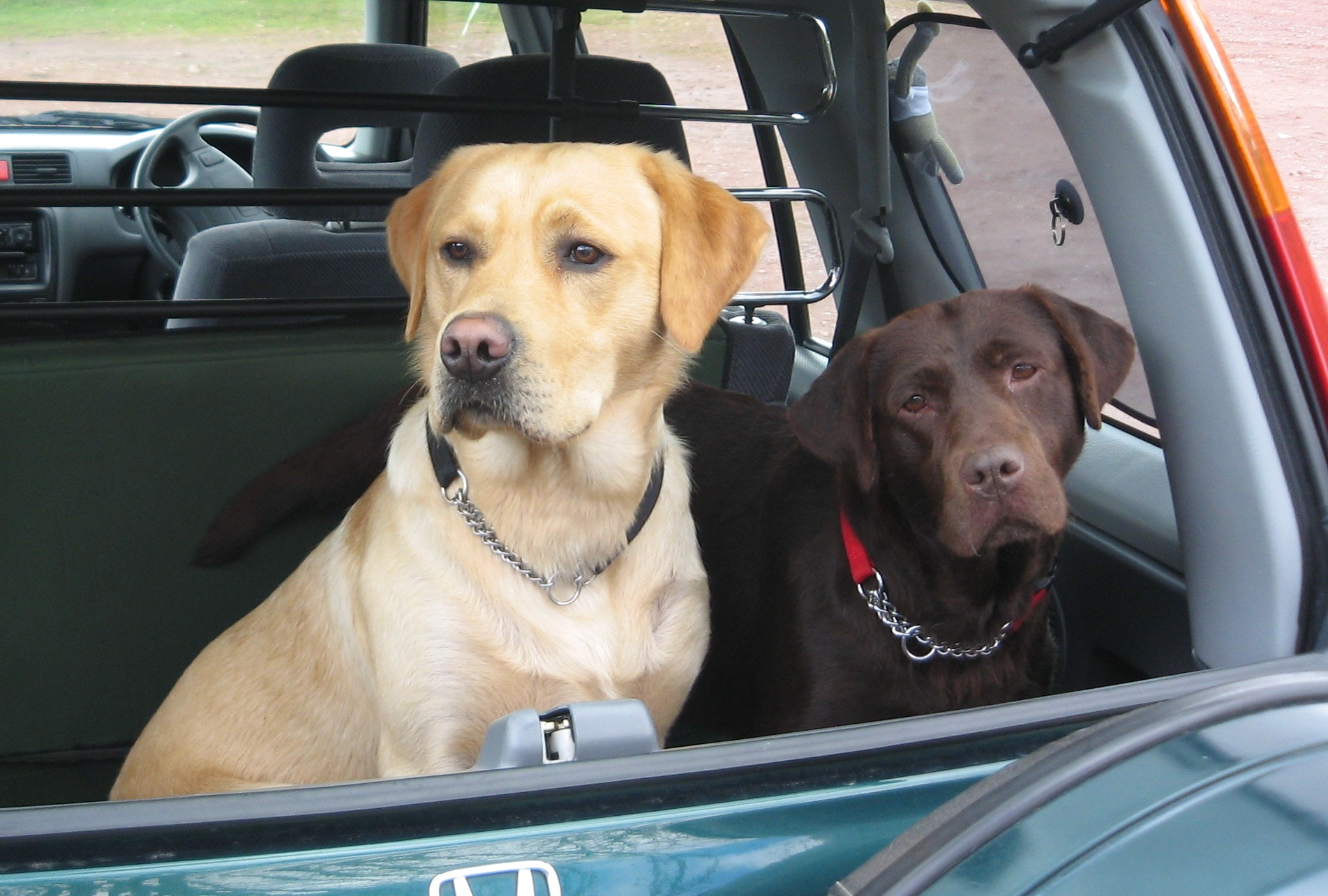 File Labradors About To Be Taken Home 2422658403 Jpg