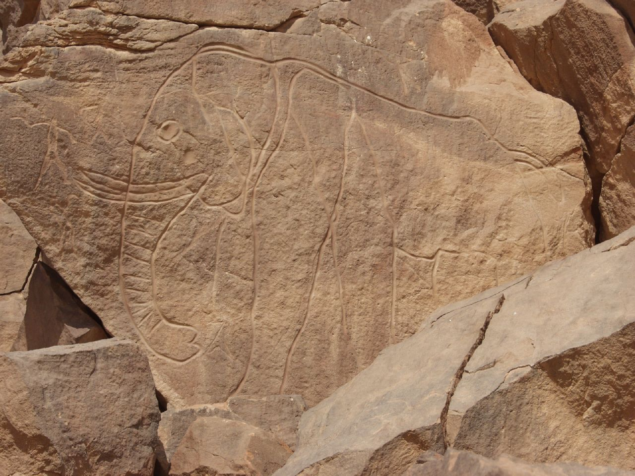 Engraving of an elephant at Mathendous in southwest Libya.