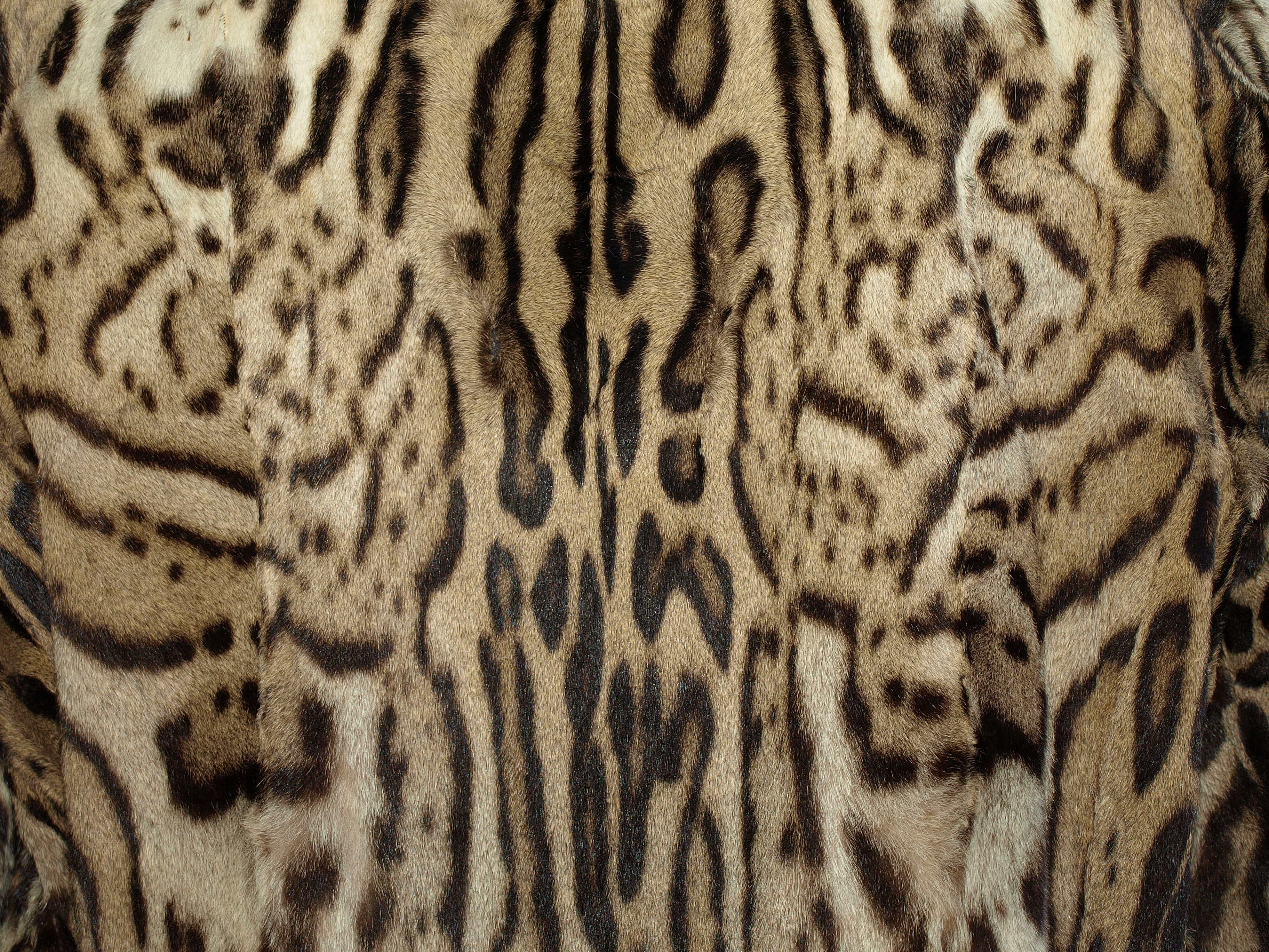 Ocelot Fur Pattern