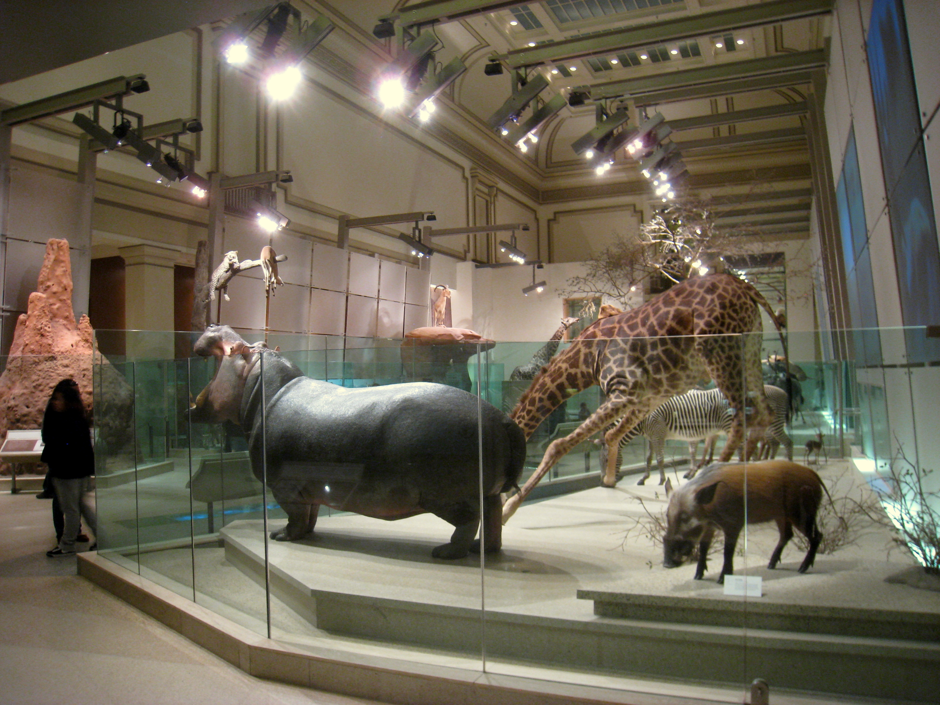 FileNational Museum Of Natural History IMG JPG Wikimedia - Historical museums in usa