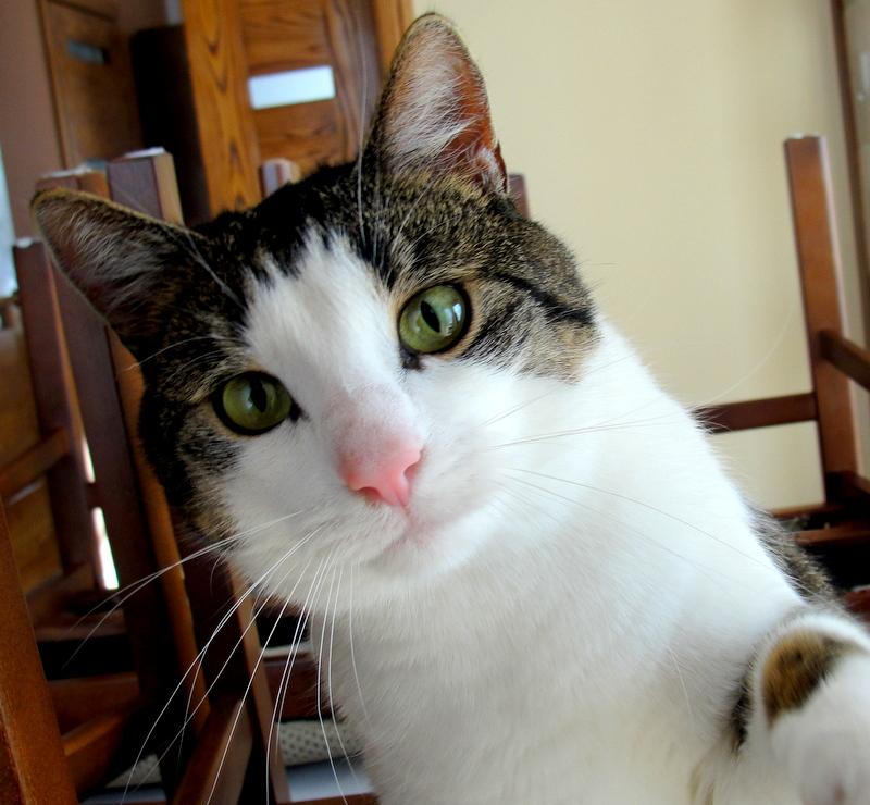 گربه - Wiktionary
