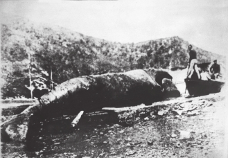 The last whale killed in Orio