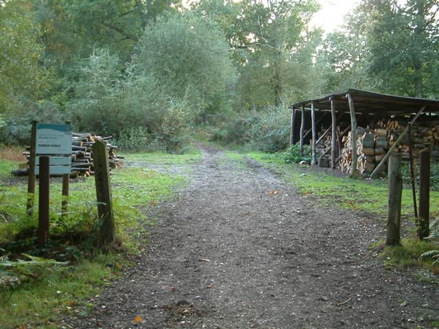 Pamber Forest Woodyard - geograph.org.uk - 63170