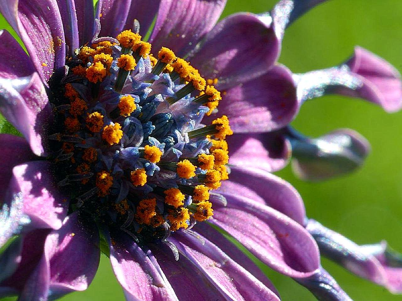 Purple flower excreting pollen, one common outdoor irritant for both asthma and COPD patients.