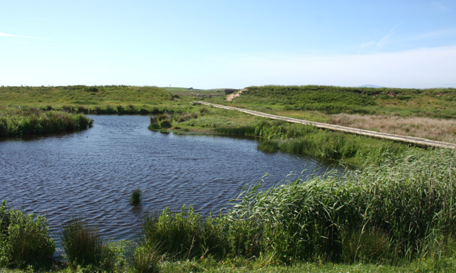 Pond in the South Walney Nature Reserve - geograph.org.uk - 848347