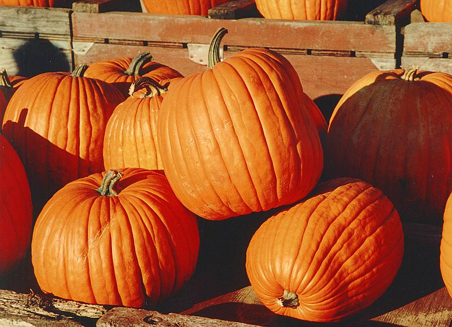 Pumpkin - Wikipedia