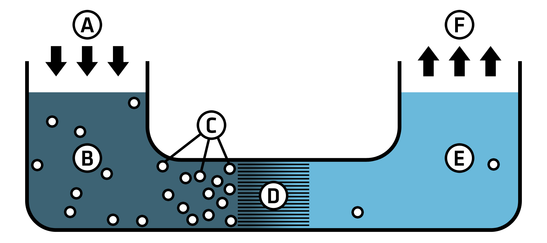 A schematic showing reverse osmosis
