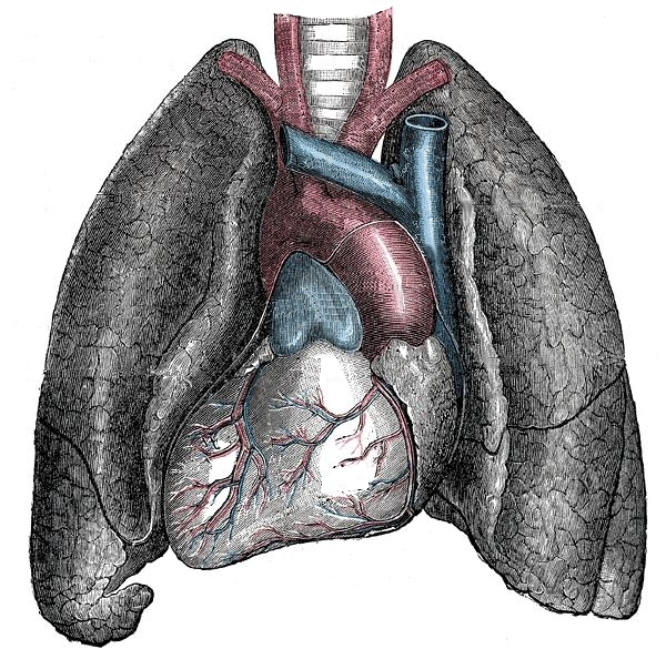 Situs inversus - Mirrored heart and lungs