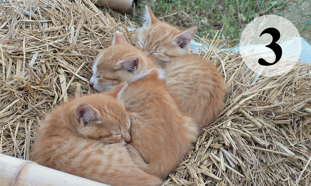 Three kittens.png