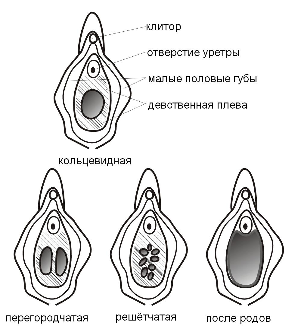 otverstie-v-klitore