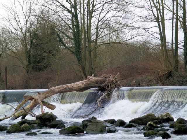 Uprooted tree stuck on weir River Don - geograph.org.uk - 481036