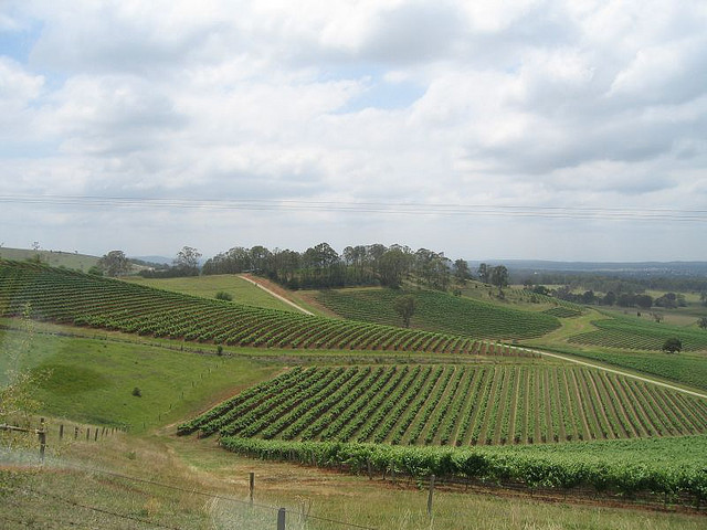 File:Vineyards in Hunter Valley Wine Tour.jpg