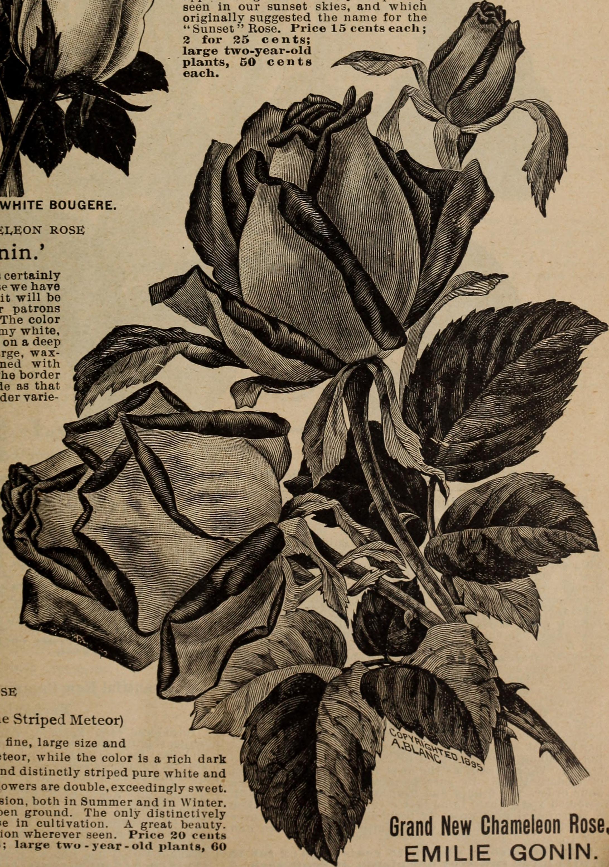 File1902 illustrated catalogue beautiful flowers and seeds that file1902 illustrated catalogue beautiful flowers and seeds that grow for every home izmirmasajfo