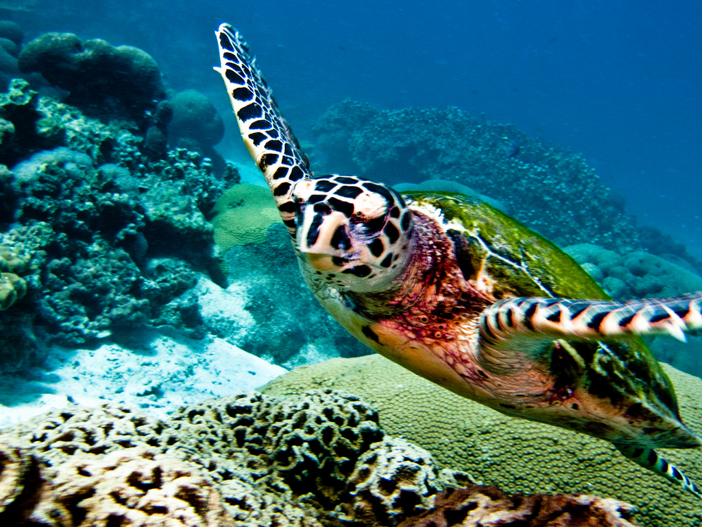 Reef Club Beach Resort Progreso