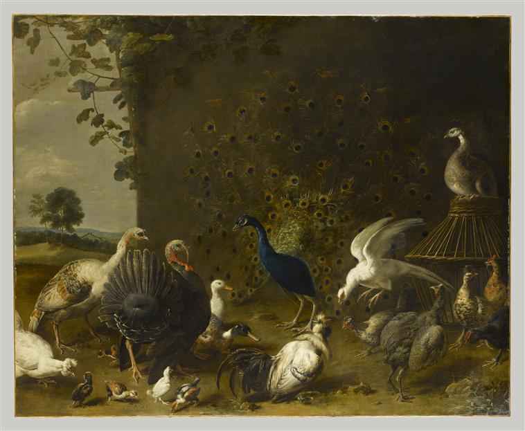 Oiseaux de basse-cour