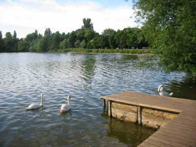 Batchwood Lake at the Aquadrome Rickmansworth - geograph.org.uk - 27933