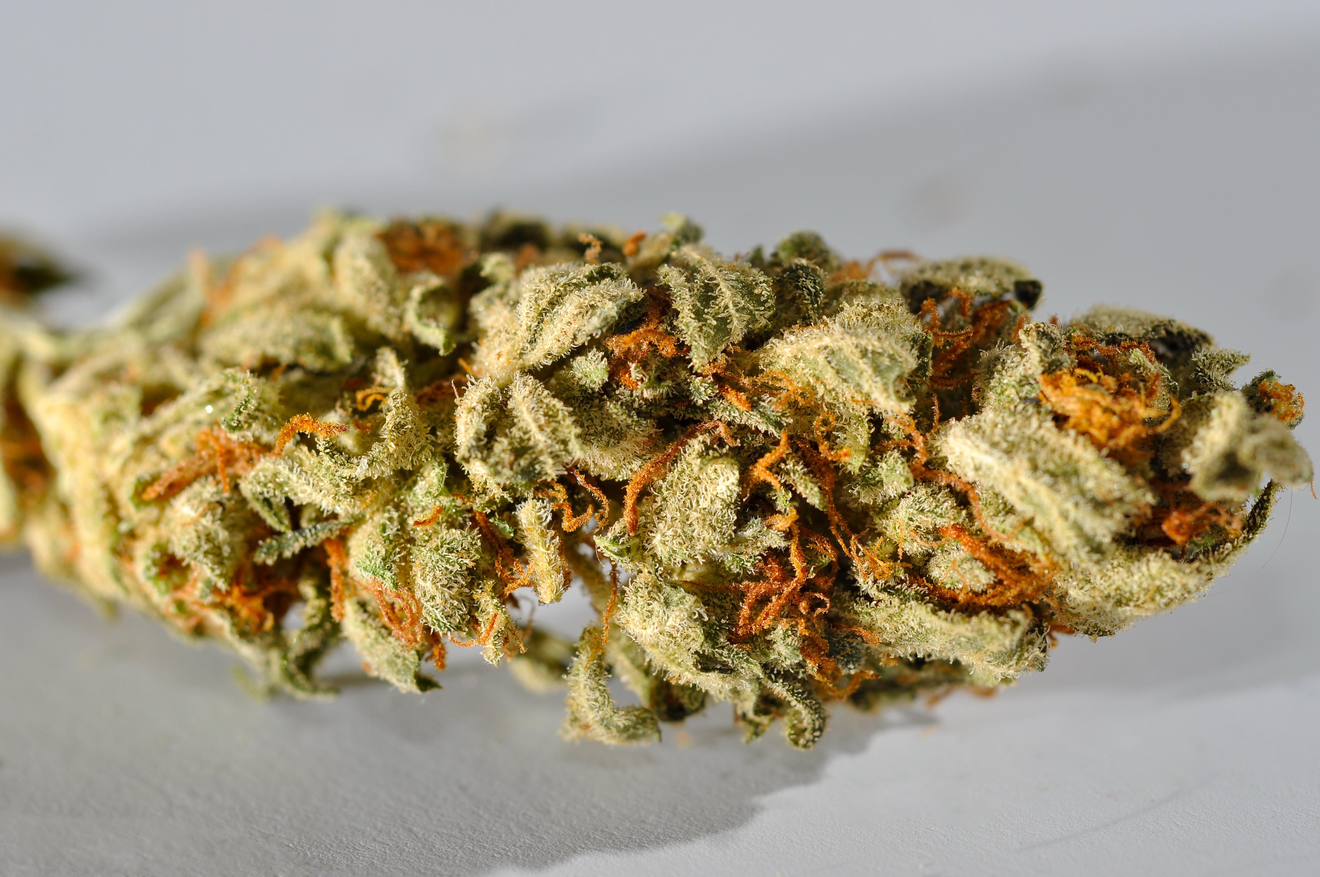 8b5b532088d Cannabis (rusmiddel) – Wikipedia