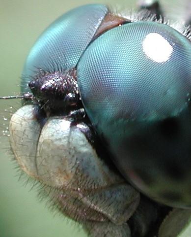 Los Insectos Para Tarea - Info - Taringa!