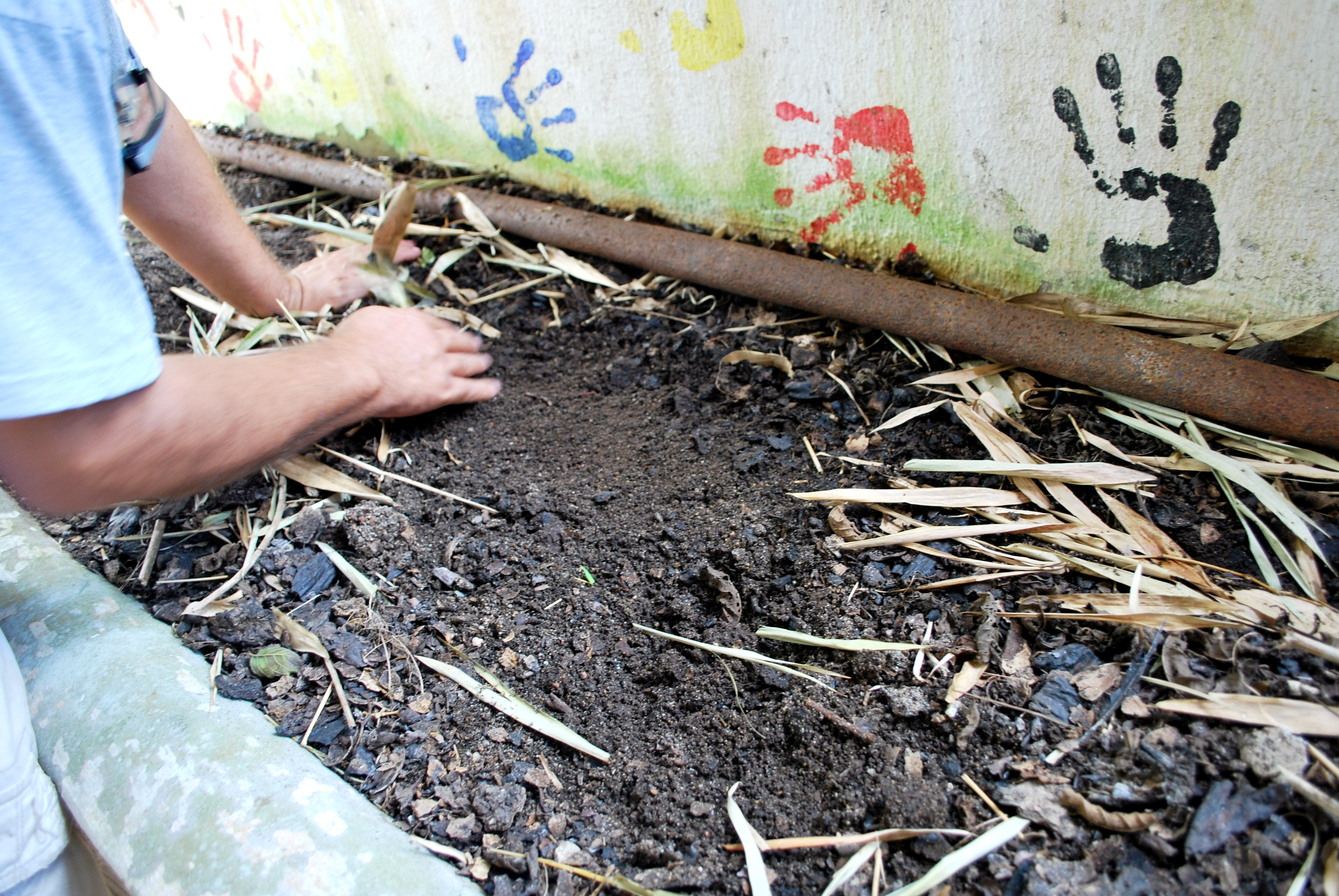 Wiki earthworm upcscavenger for Importance of soil wikipedia