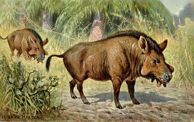 Entelodon Sp Illustration