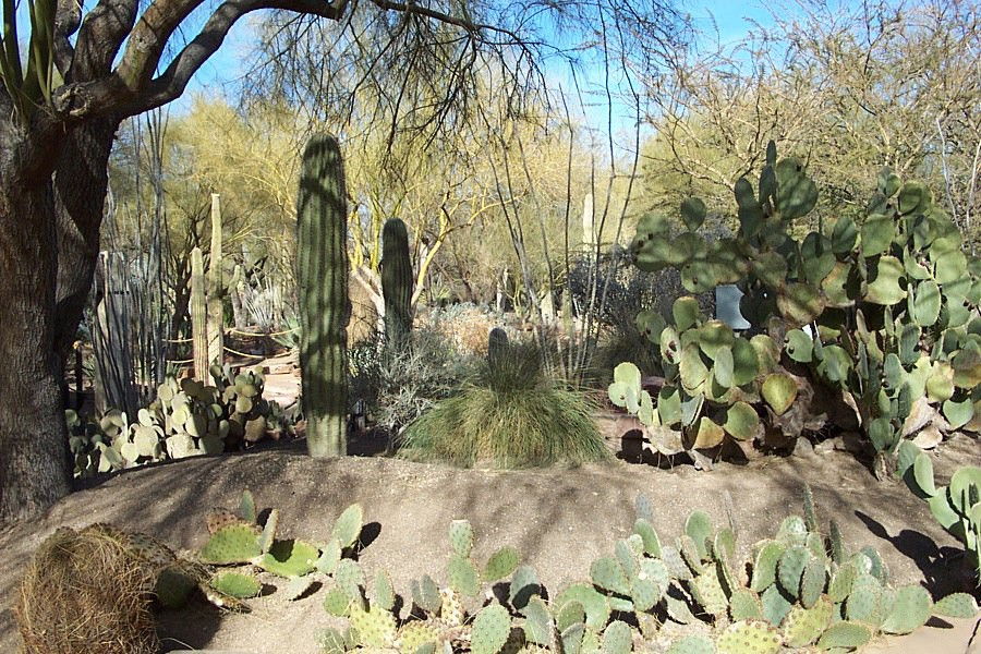 Ethel M Botanical Cactus Garden Wikipedia