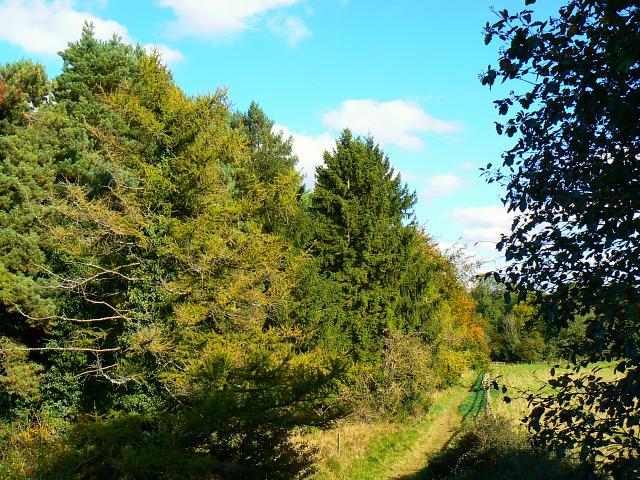 Footpath to Stanton Fitzwarren, Swindon - geograph.org.uk - 1526485