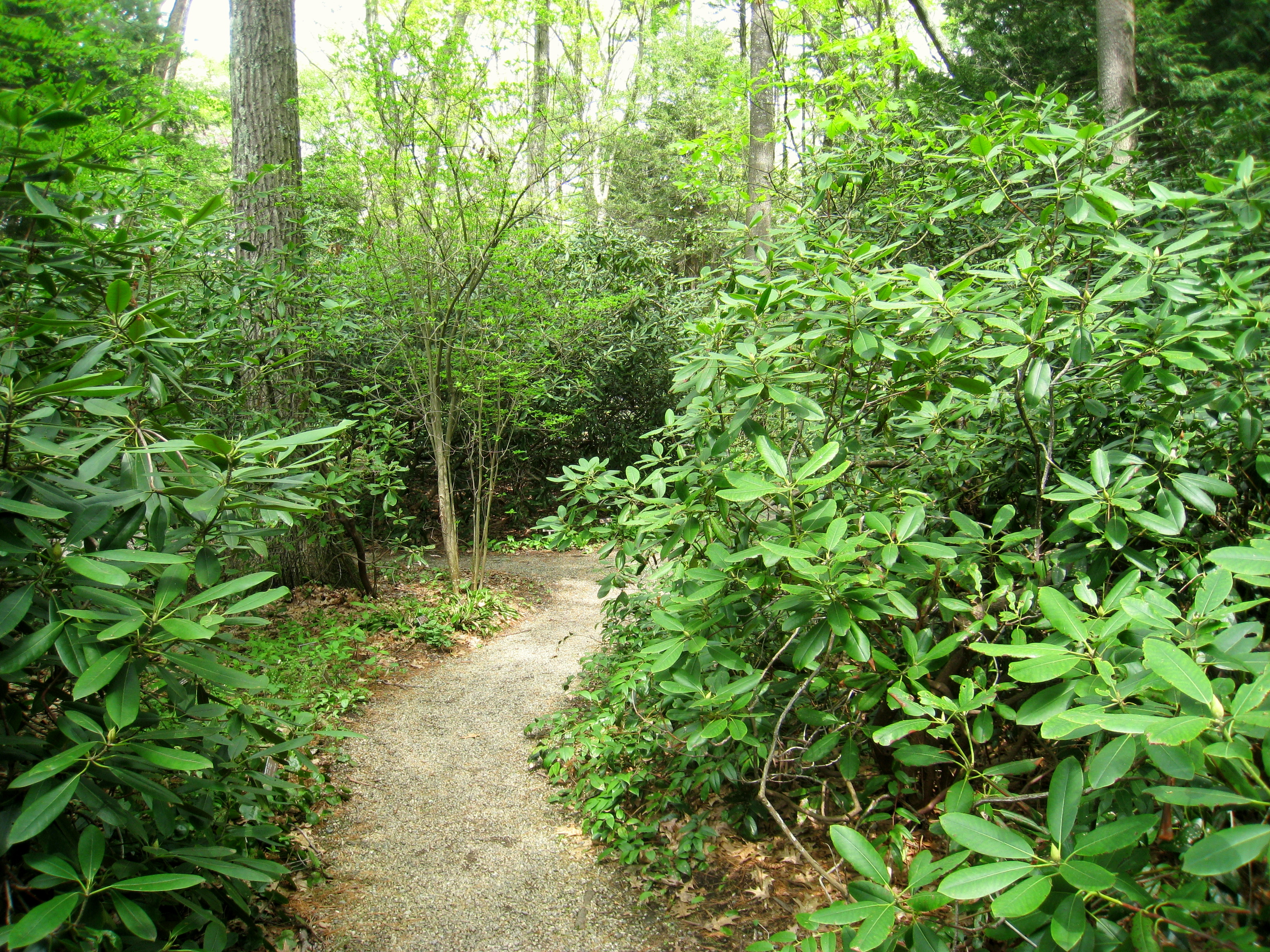 Landscaping Backyard With Woods : File garden in the woods img g wikipedia