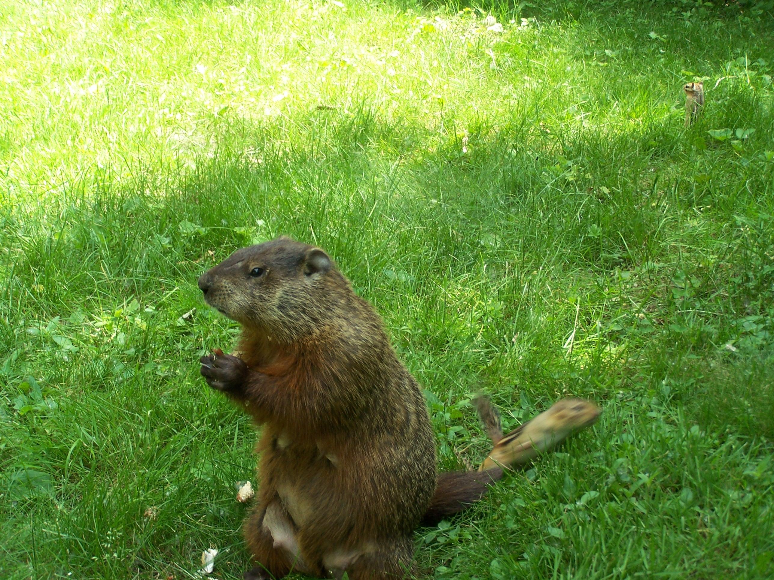 File:Groundhog & Chip-pose.jpg