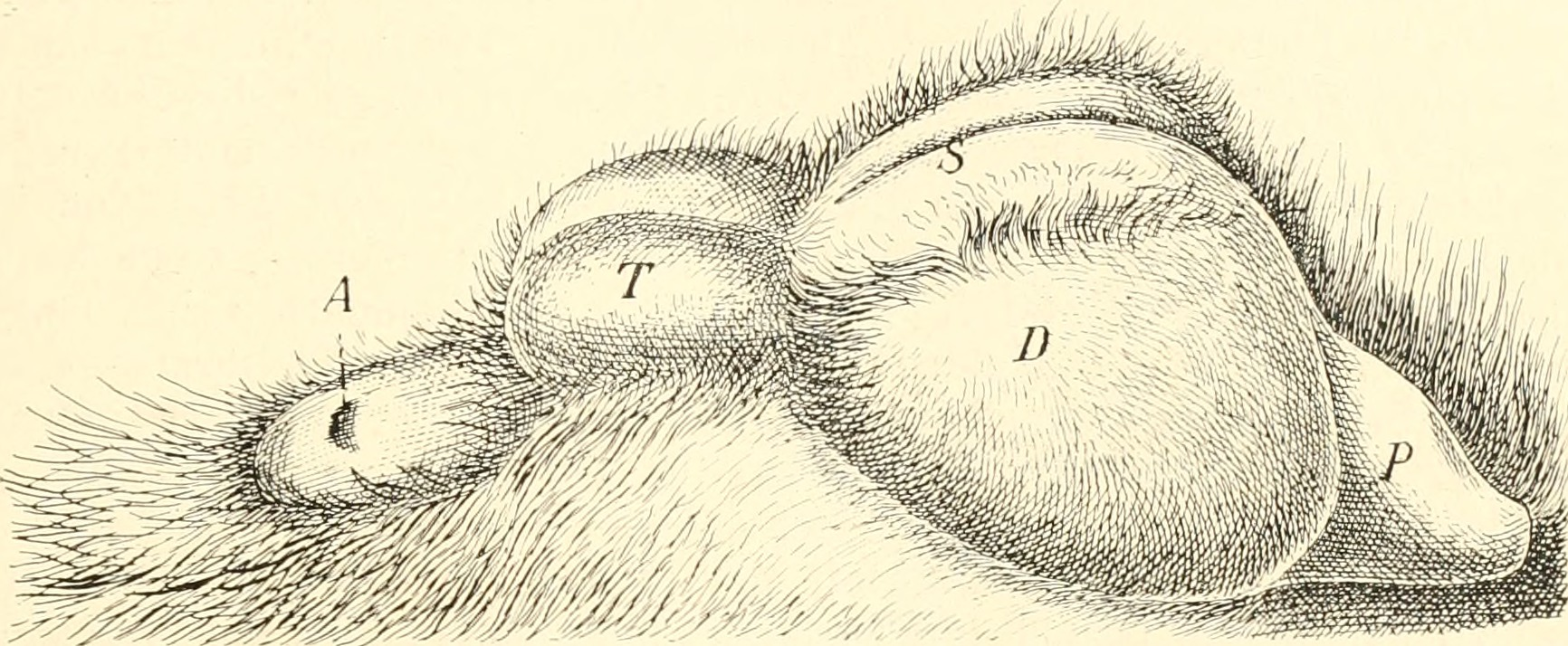 File:Image from page 534 of \