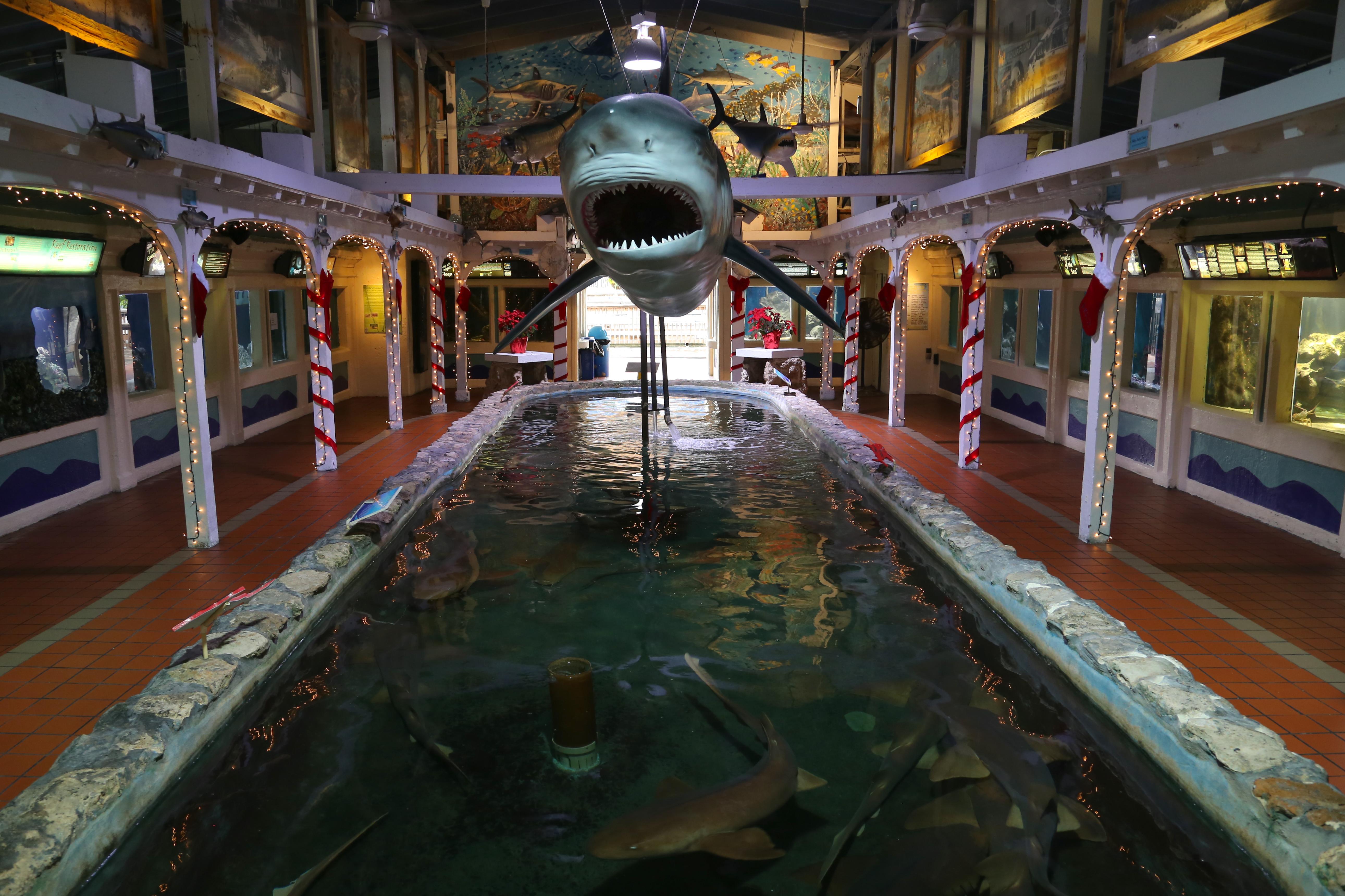 Mini Shark Aquarium