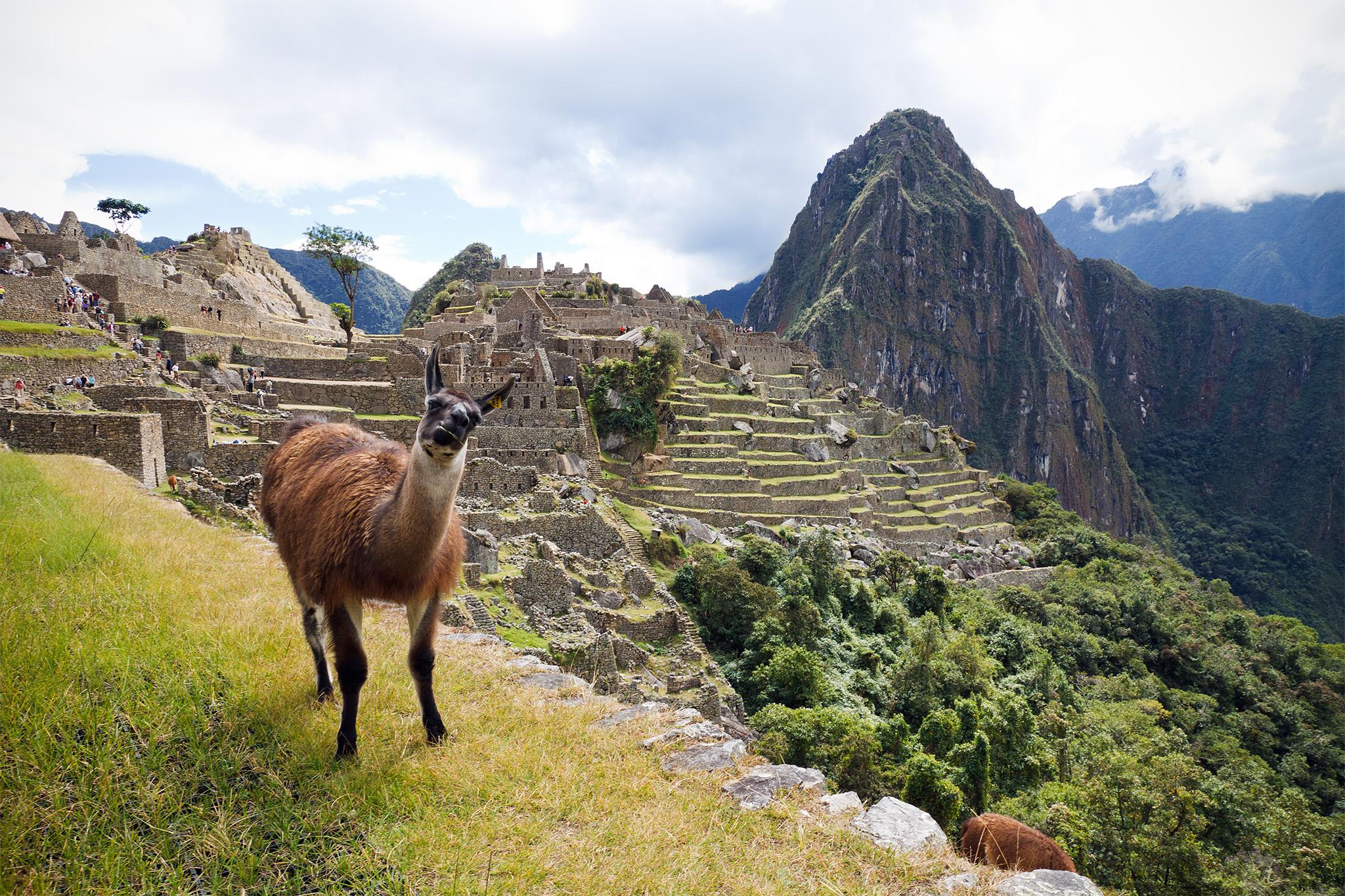 File:Lama op Machu Pichu, -21 juni 2011 a.jpg - Wikimedia ...