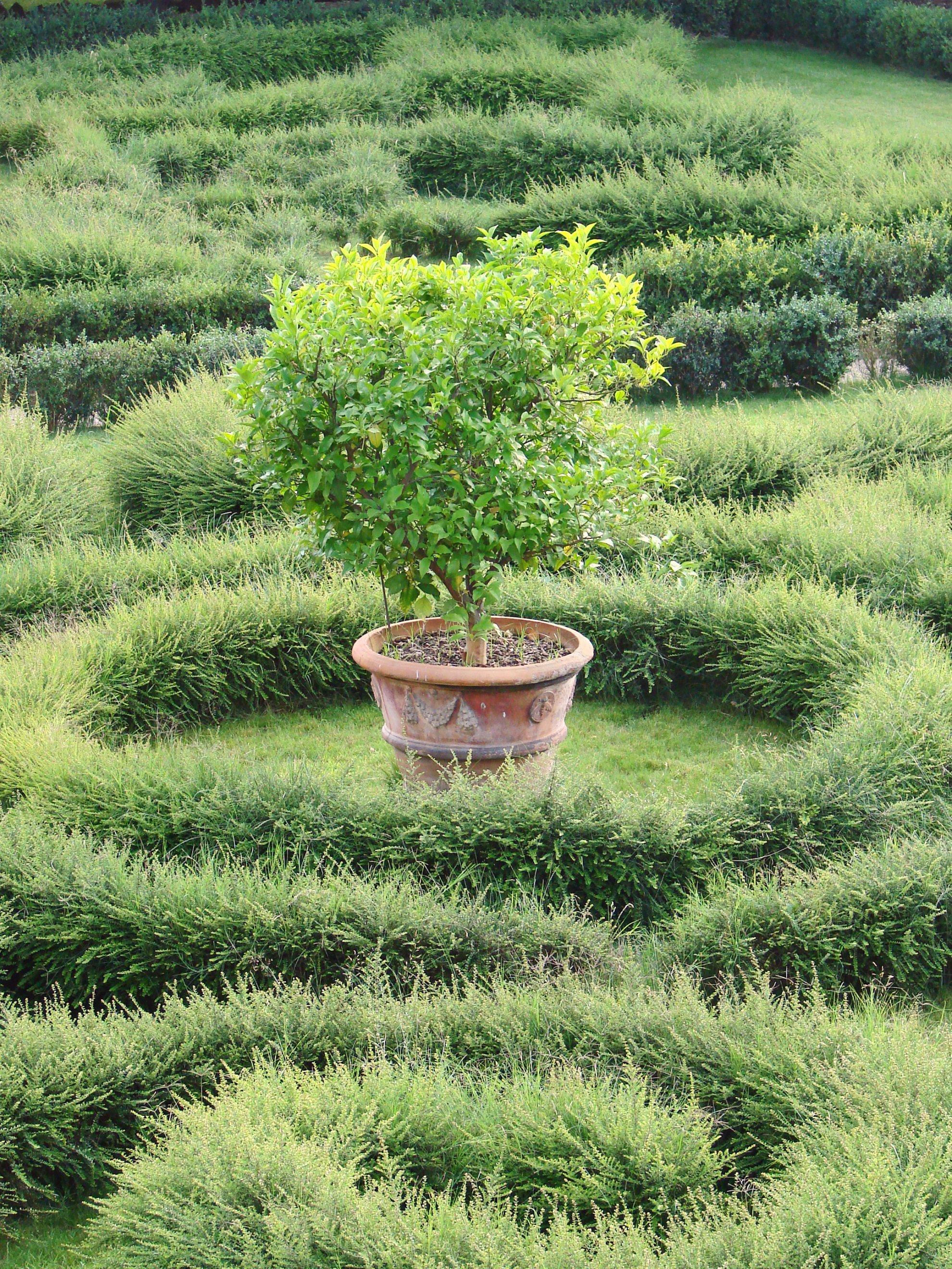 File le jardin du palais barberini rome 5969791353 jpg for Le jardin 489 rome
