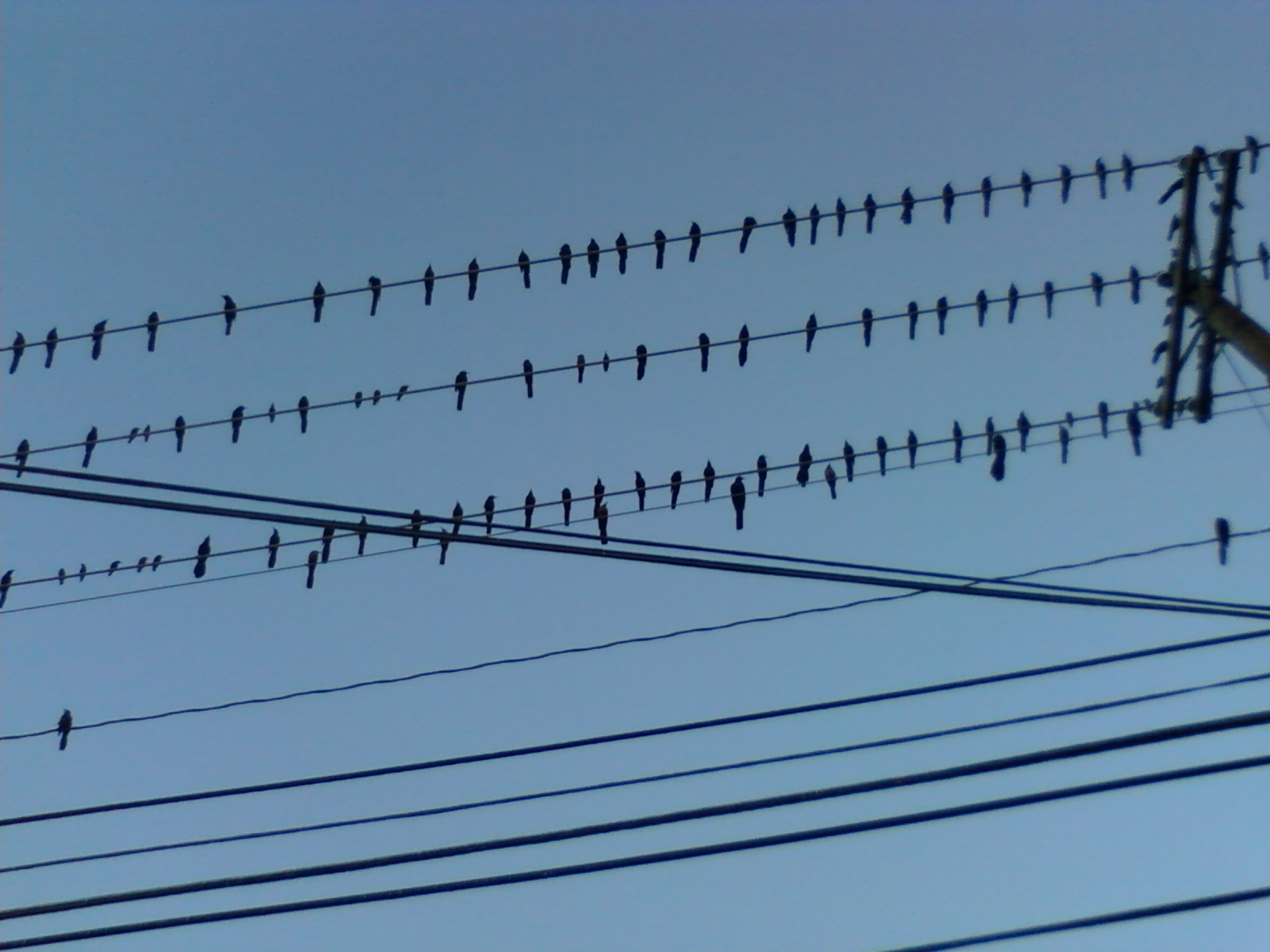 Black Bird On A Telephone Wire - WIRE Center •