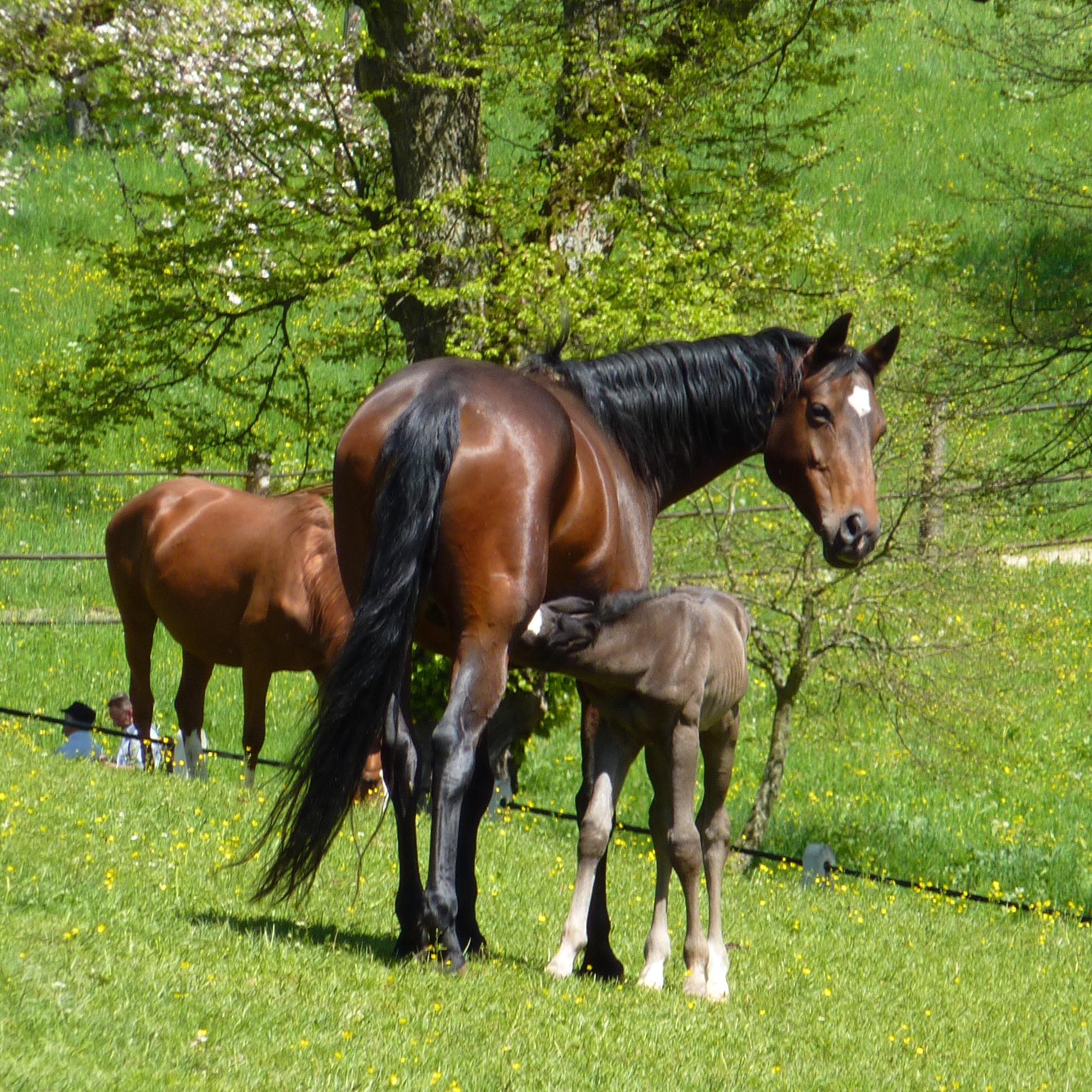 Gedeckt frau vom pferd Meine Geschichte