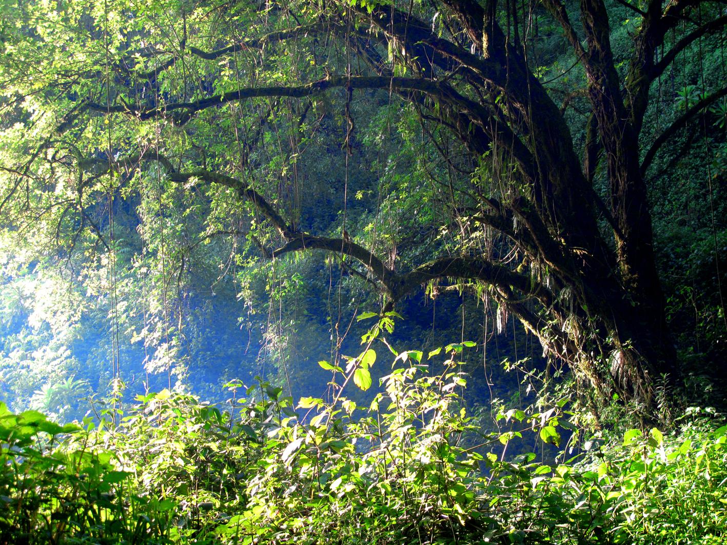 Mount Elgon Forest, Kenya