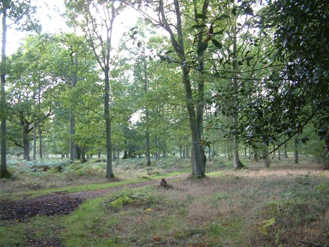 Pamber Forest - geograph.org.uk - 63157