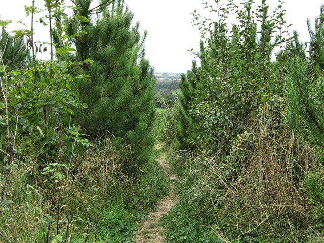 Path through young trees - geograph.org.uk - 1521059