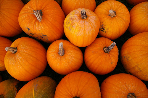 File:Pumpkins-2009.jpg