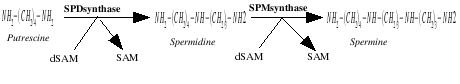SPD SPM synthesis.jpg