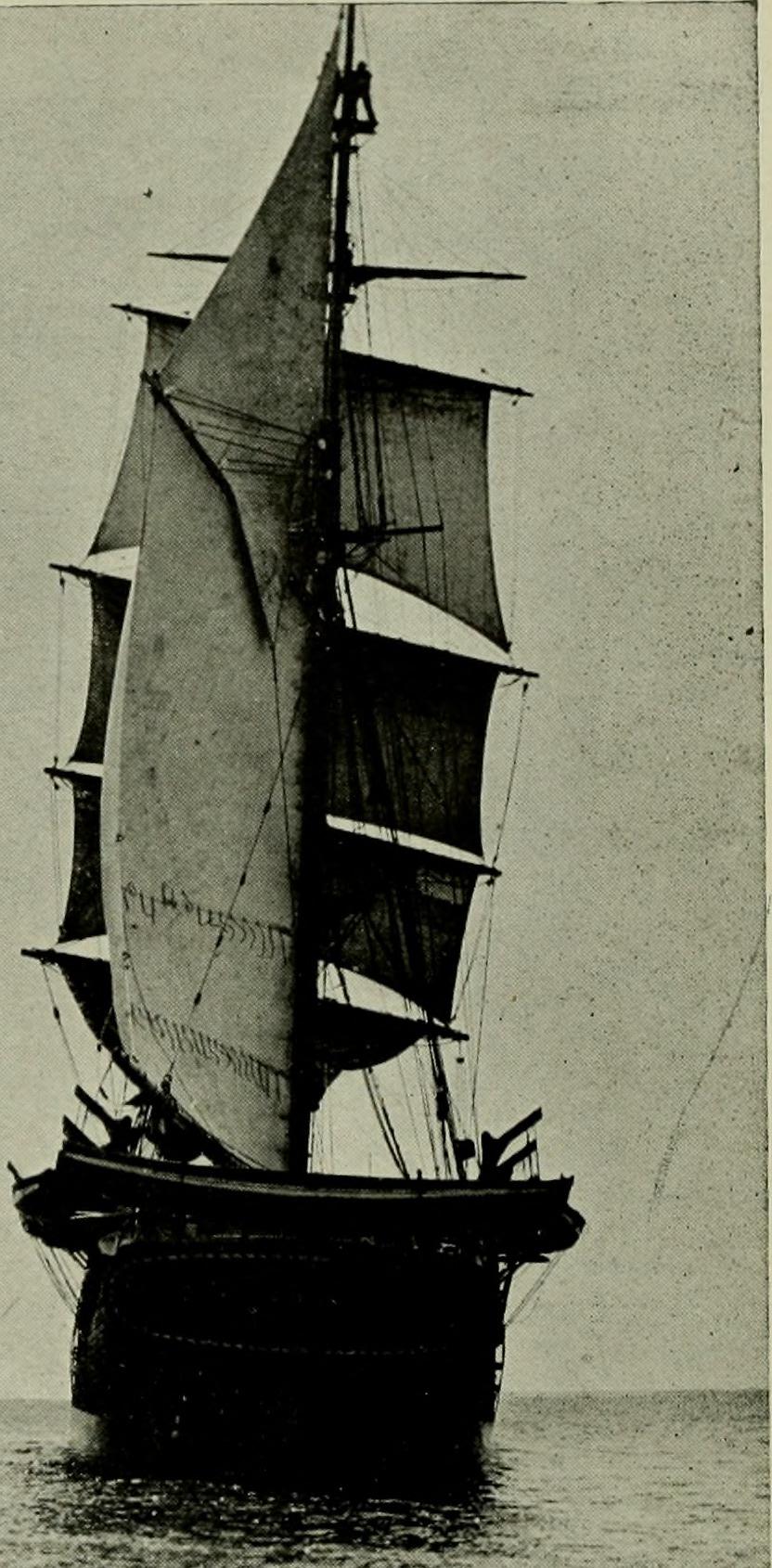 Image of Robert Cushman Murphy from Wikidata